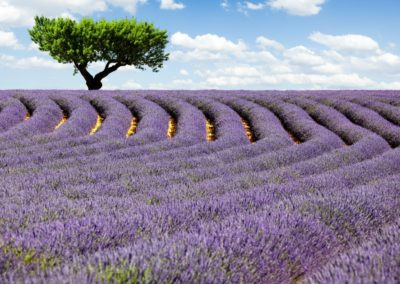 nr-3lavender-fields-in-Provence_travel_lavender-fields_trip_Provence_hottrip-net6